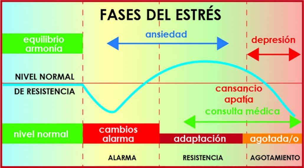 fases del estrés, ansiedad y depresión